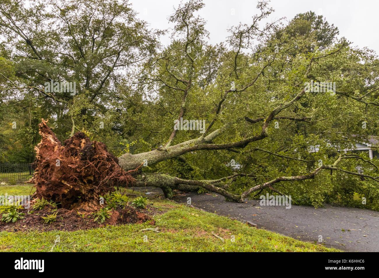 Horizontale Foto des gefallenen Baum in eine Straße nach Tropischen Sturm Irma Stockbild