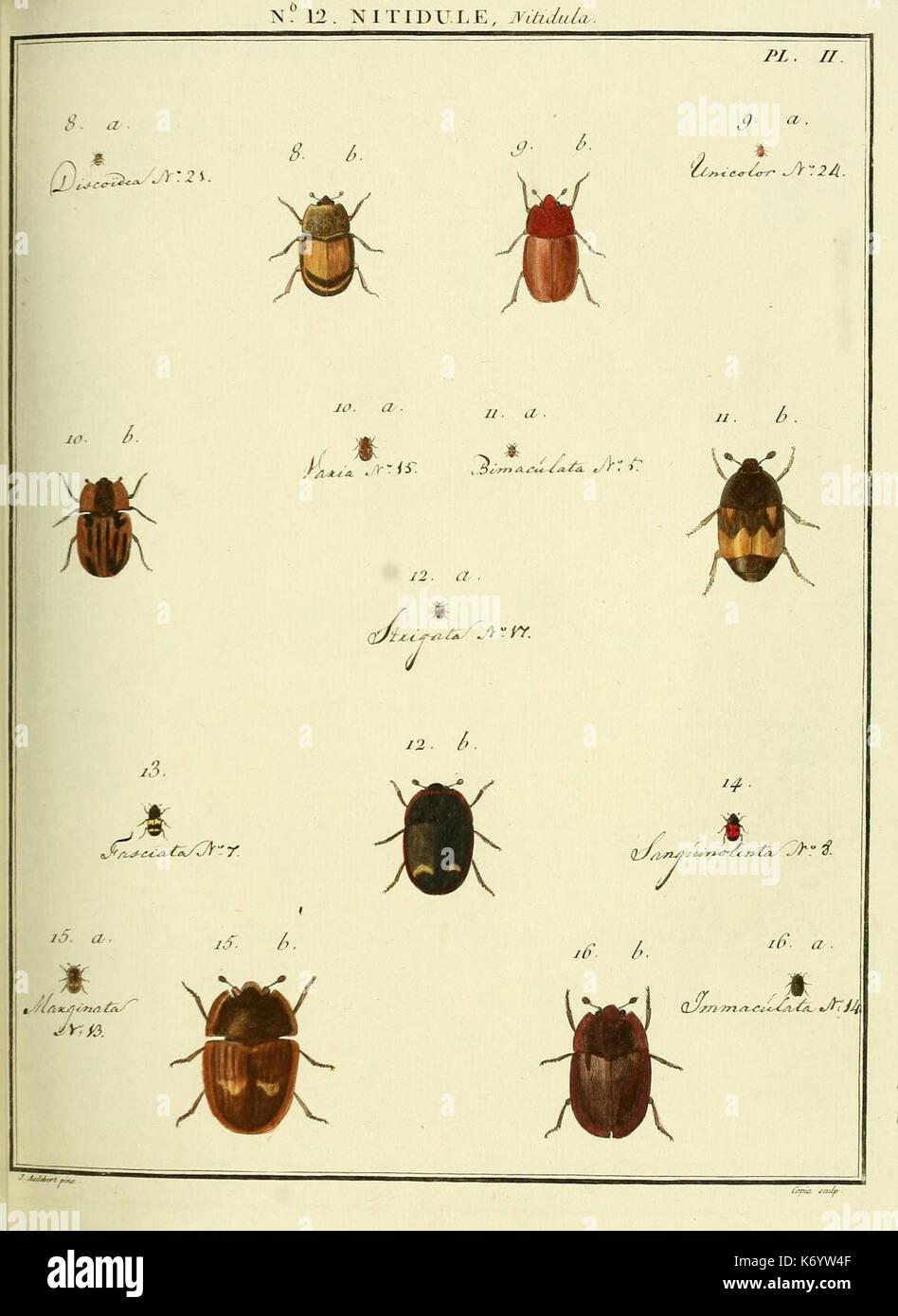 Entomologie, ou Histoire Naturelle des Insectes (Nr. 12 Nitidule Pl. II) (8112669469) Stockbild