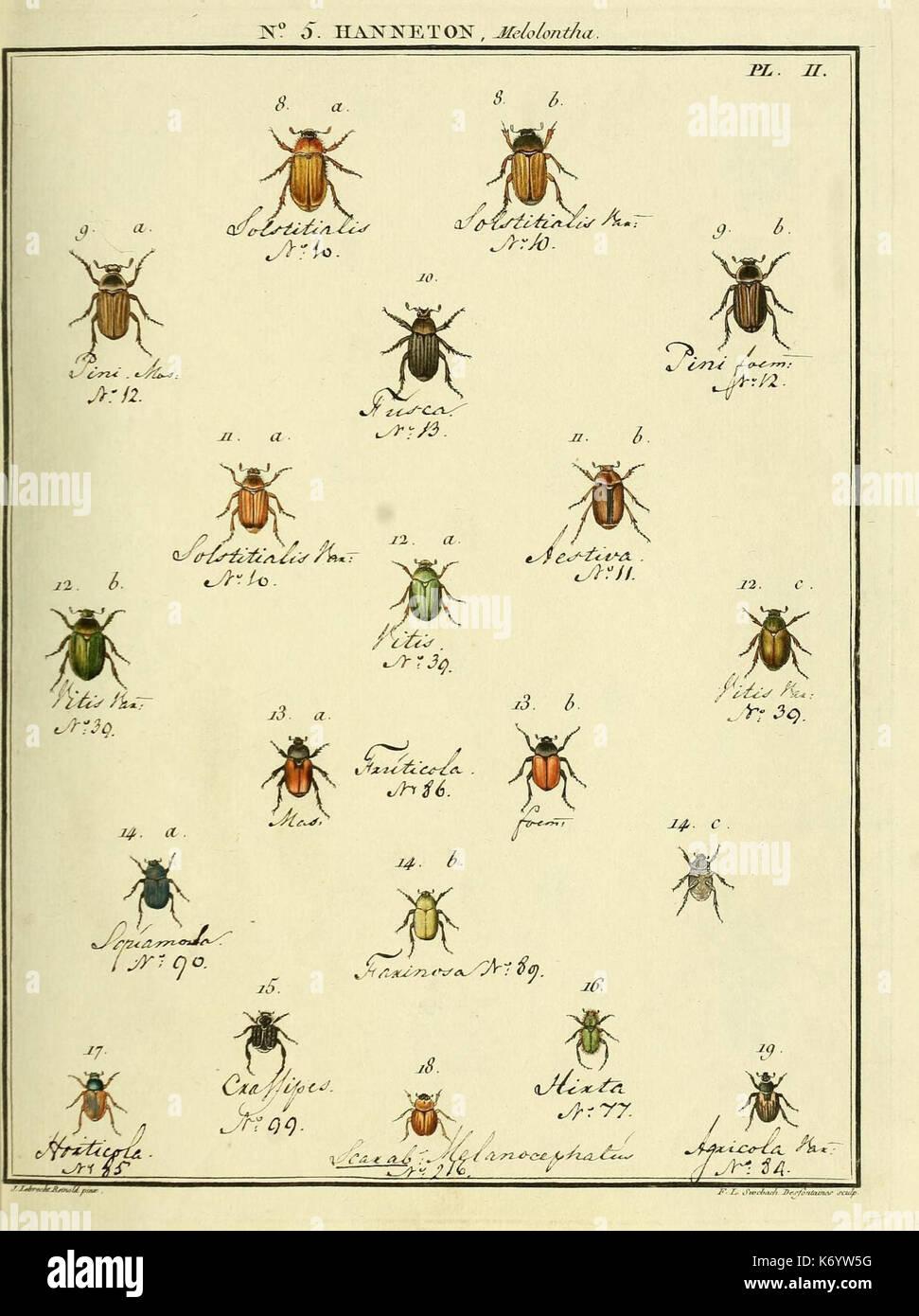 Entomologie, ou Histoire Naturelle des Insectes (Nr. 5 Hanneton Pl. II) (8112655625) Stockbild