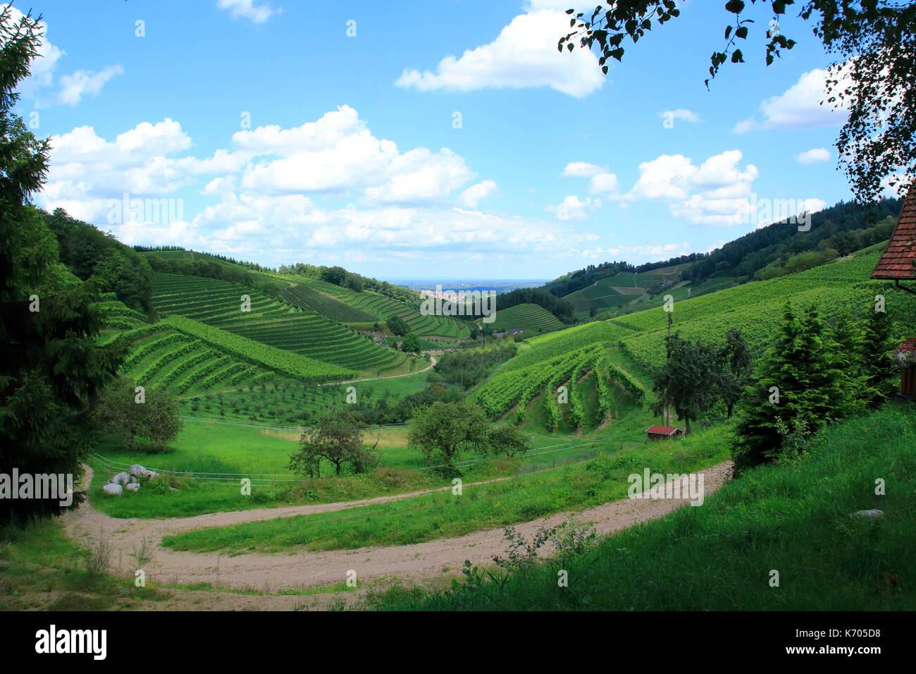 Blick über Reben in Bottenau, Ortenberg im Ortenaukreis, Schwarzwald Stockbild