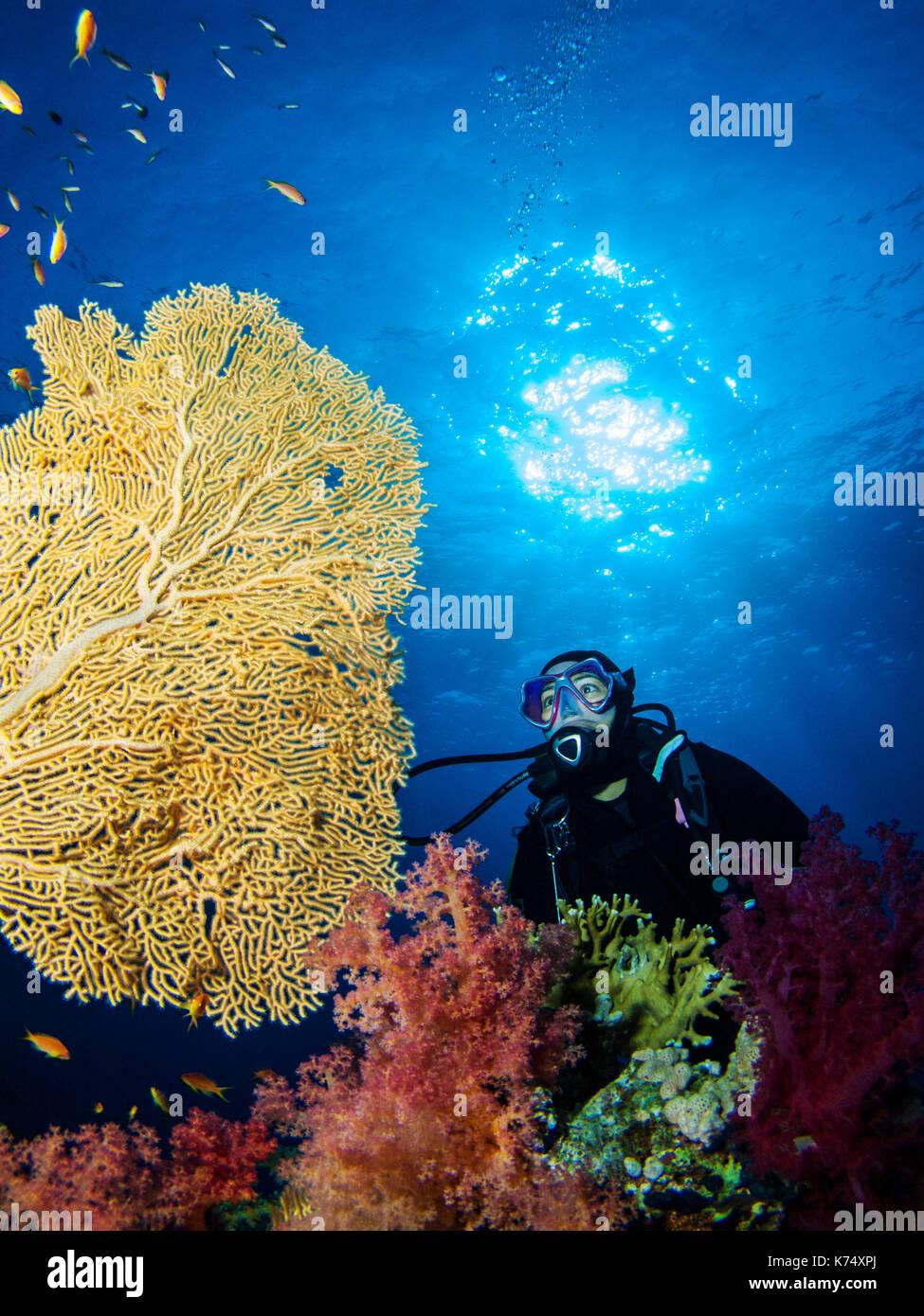 Girl Scuba Diver betrachten eine Gorgonie Gorgonie Stockfoto, Bild ...