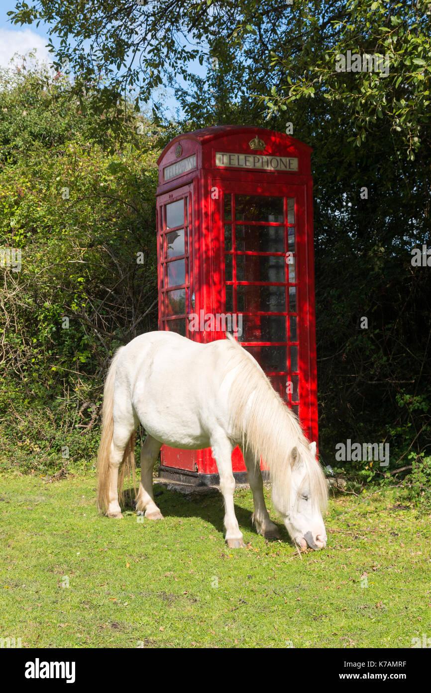 Minstead, New Forest, Hampshire, 15. September 2017. UK Wetter. Dies ist England. Ein weißes Pferd Schürfwunden grünes Gras neben einer traditionellen roten Telefonzelle. Warme, sonnige Herbstwetter im Nationalpark. Credit: Paul Biggins/Alamy leben Nachrichten Stockbild