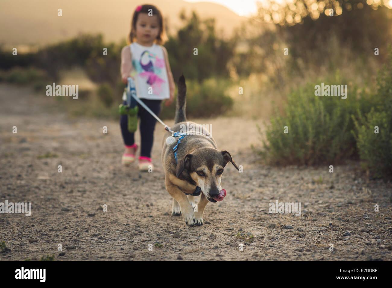 Die ganze Länge der Mädchen mit Hund Wandern auf dem Feld Stockbild