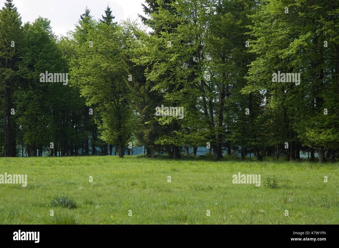 Hochebene auf Schwäbische Alb, Deutschland Stockbild
