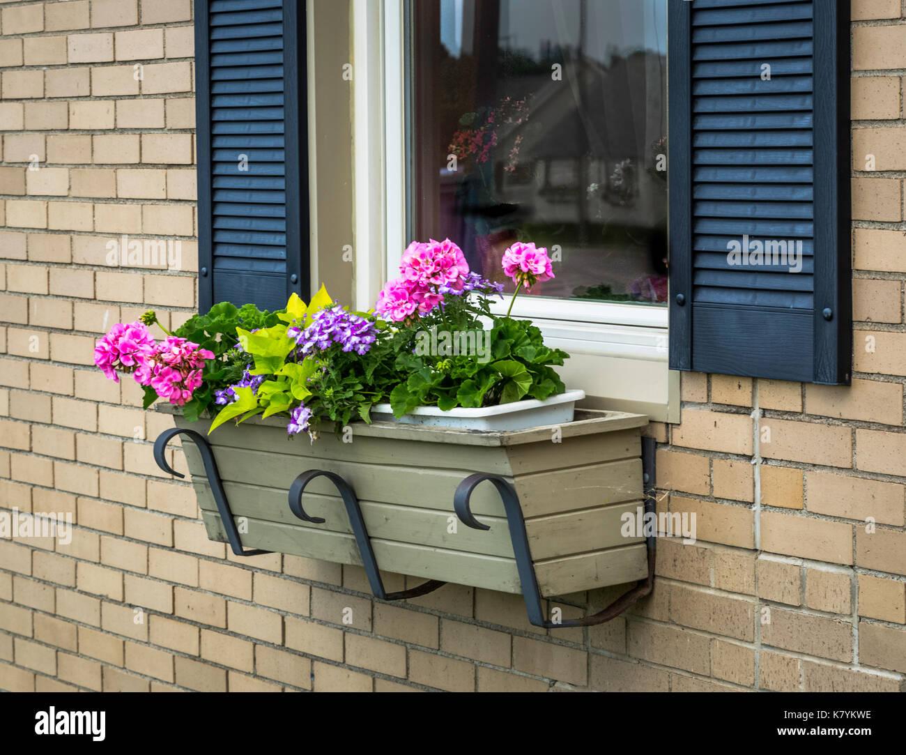 Fenster Blumenkasten mit Geranien und Sommer Jahrbücher gegen Mauer ...