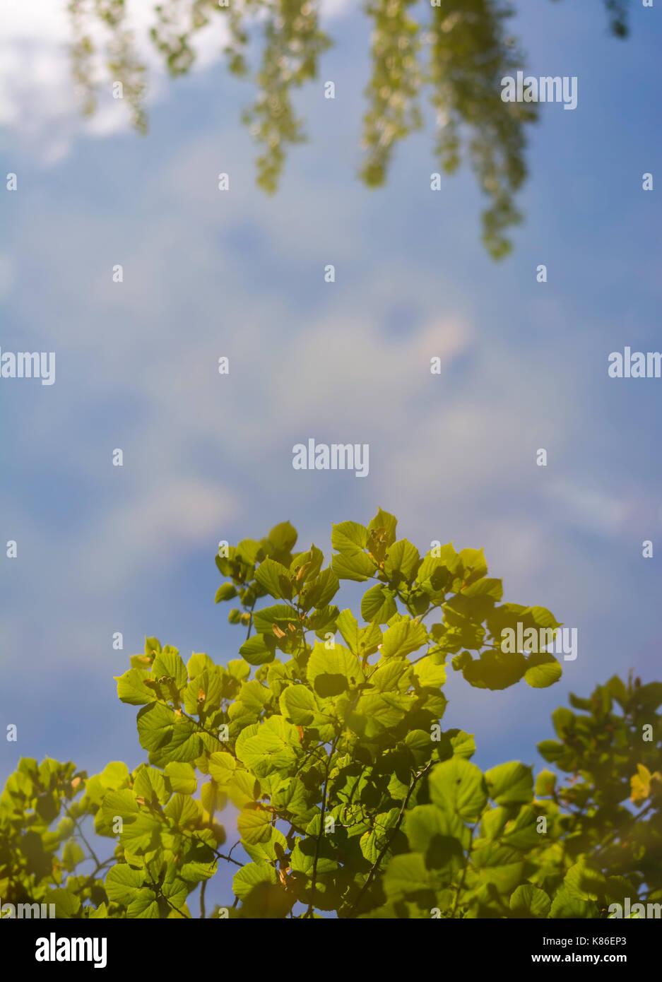 Blauer Himmel und Bäume in ruhigem Wasser reflektieren auf einen Herbst Tag in Großbritannien. Perfekte Reflektion im Wasser, im Porträt mit kopieren. Stockbild