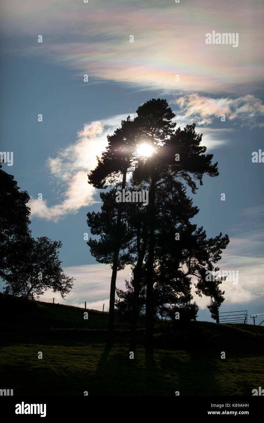 Baum Silhouette gegen die tiefstehende Sonne mit blauem Himmel hinter in einer ländlichen Umgebung in Bala Stockbild