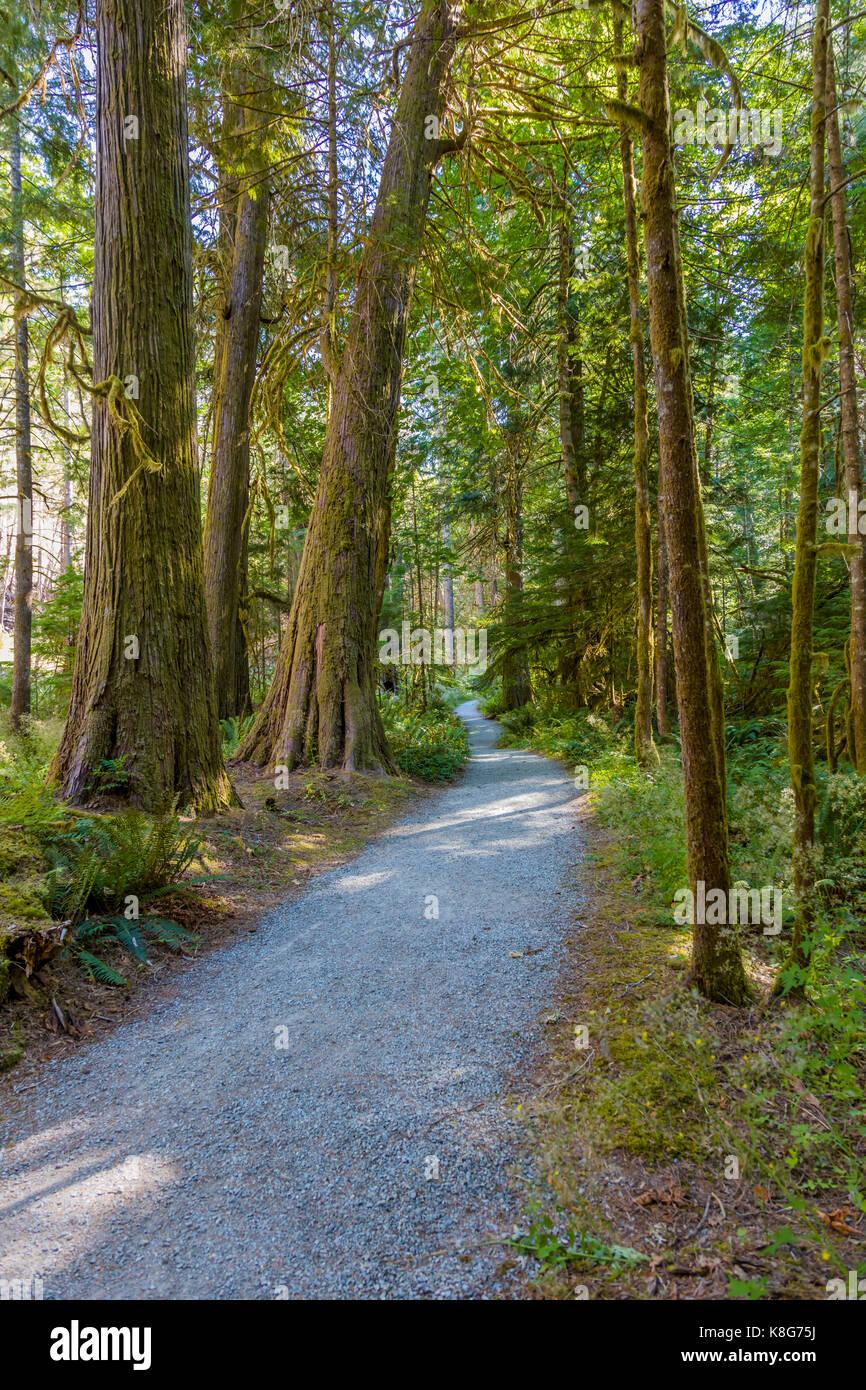 Trail obwohl Woods in der historischen Stadt Newhalem im North Cascades National Park im Nordwesten von Washington Stockbild