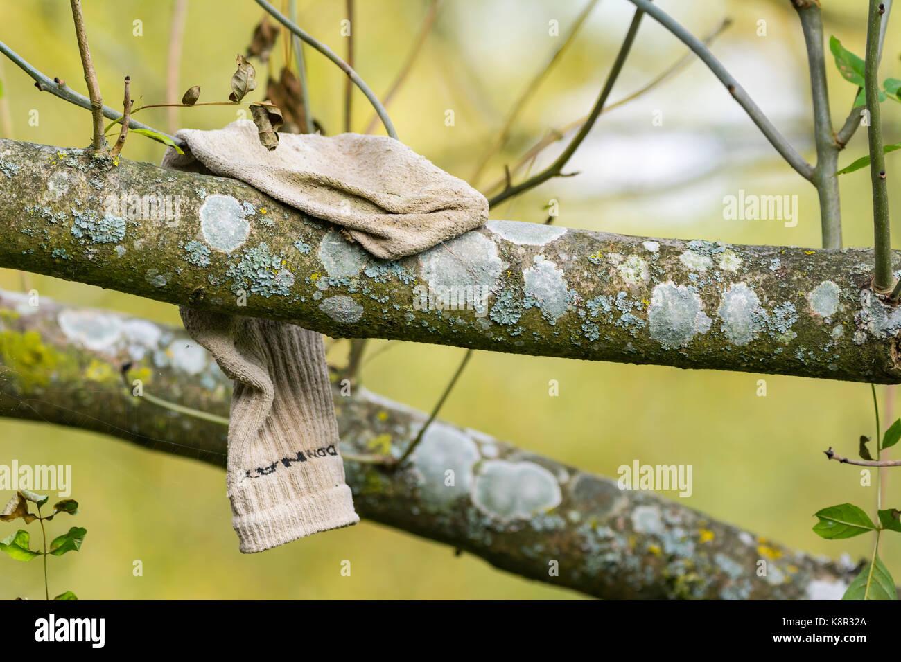 Verlorene Socke, die über dem Zweig eines Baumes. Stockbild