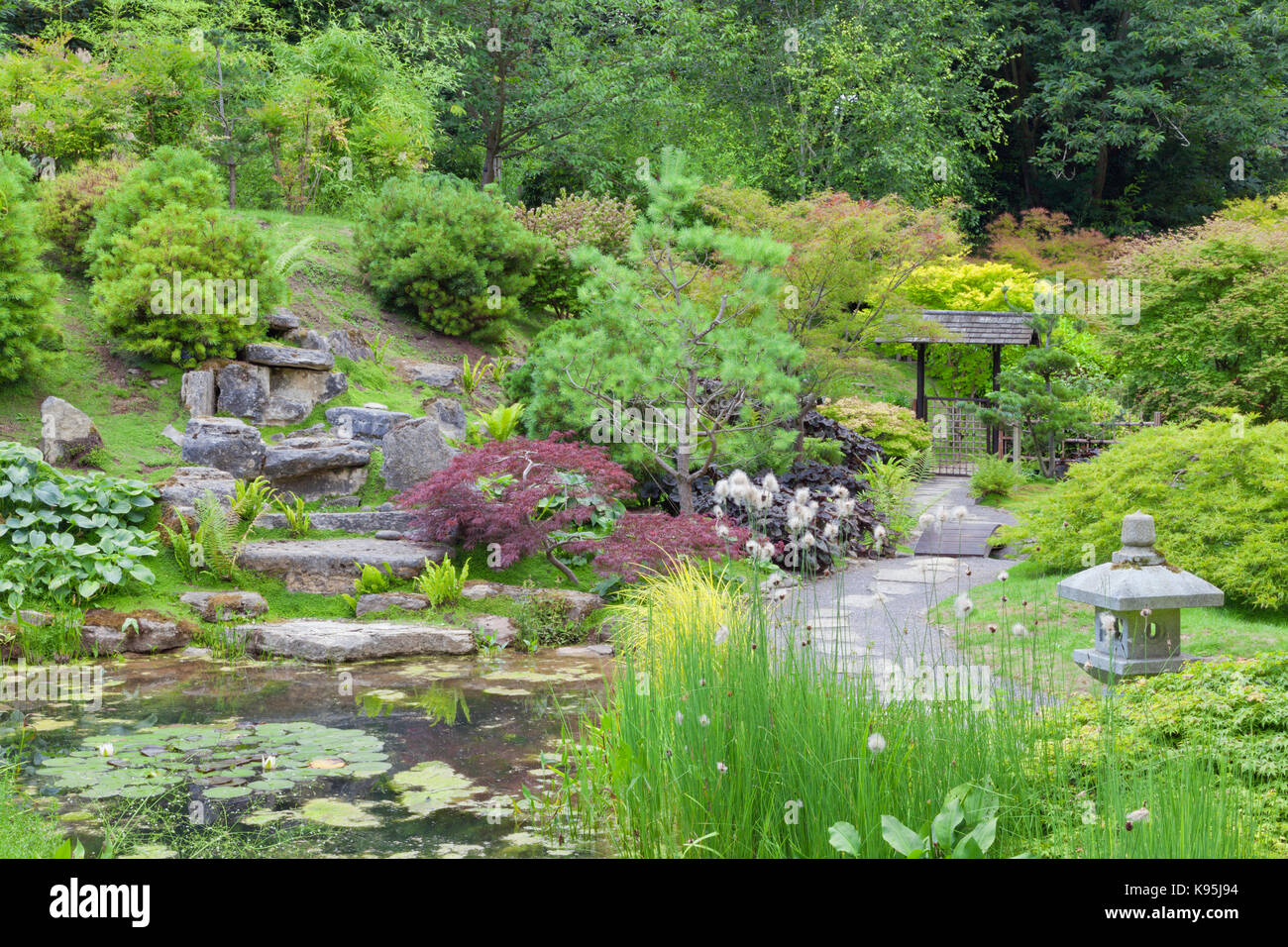 Oriental Style Rock Garten Mit Einem Kleinen Teich, Stein Laterne Von  Kiefer, Nadelbaum, Ahorn, Bäumen Und Sträuchern Umgeben.