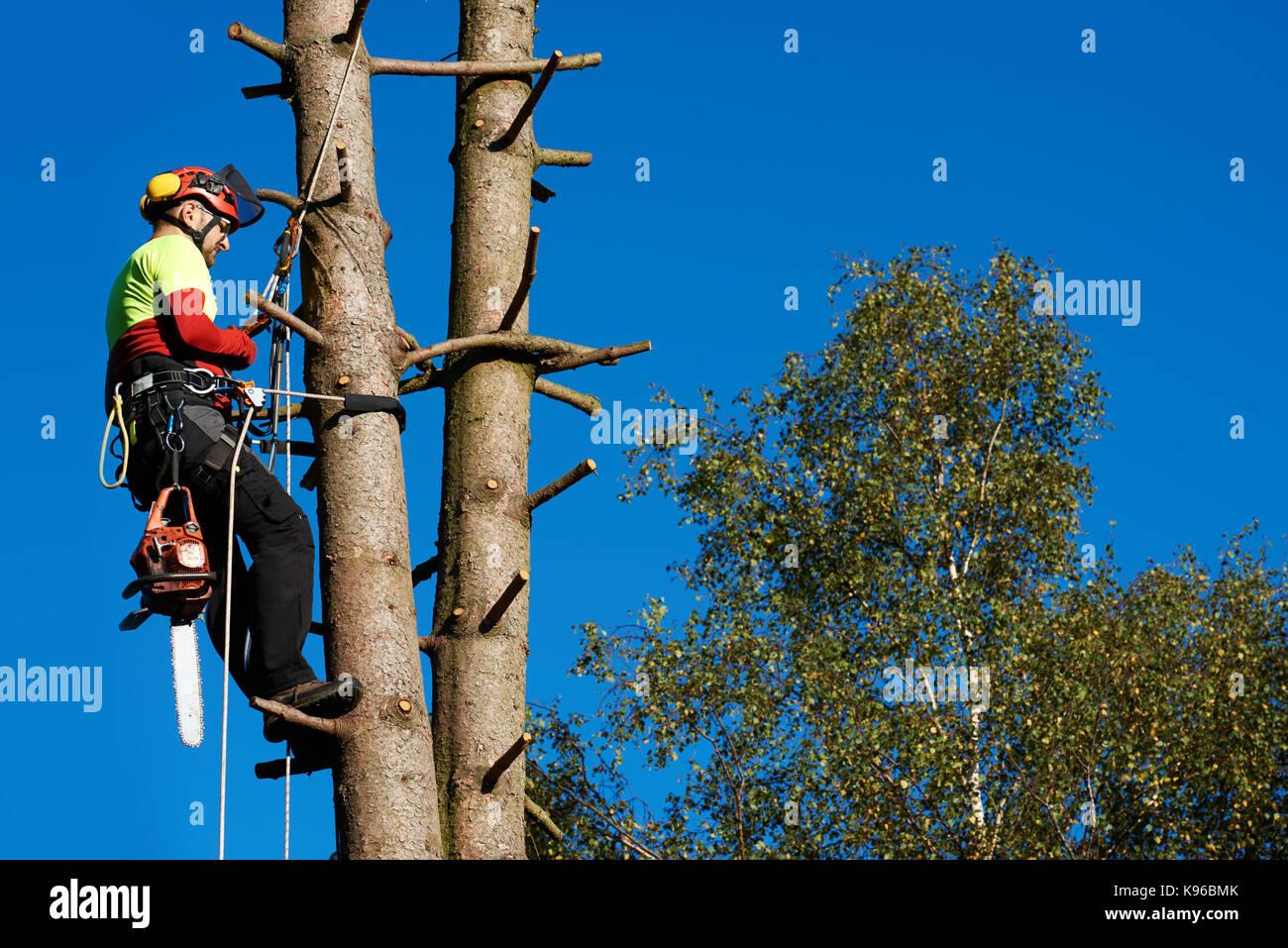 Kletterausrüstung Baum Fällen : Baumzüchter stockfotos & bilder alamy