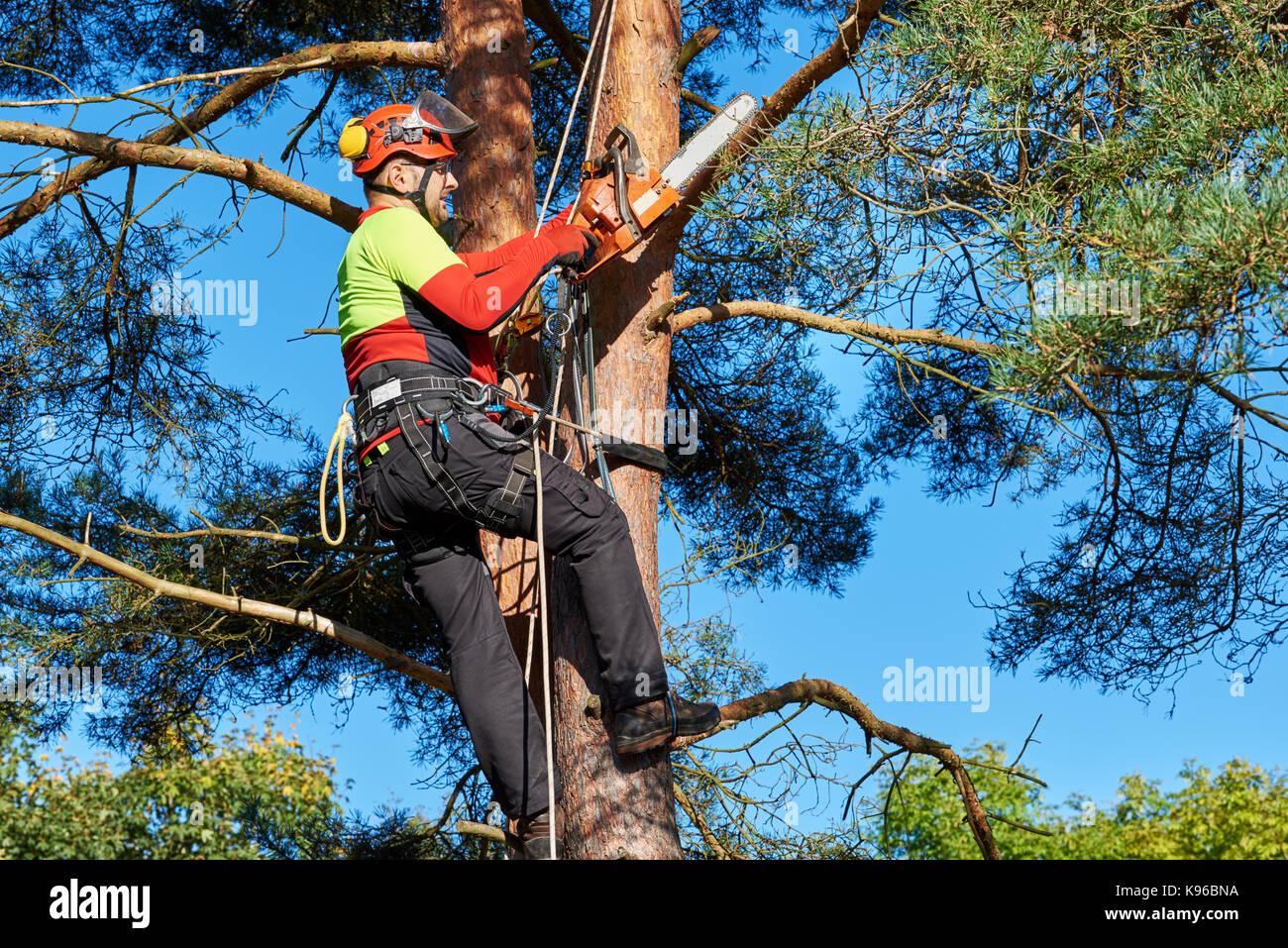 holzfäller mit säge und kabelbaum auf einen baum stockfoto, bild