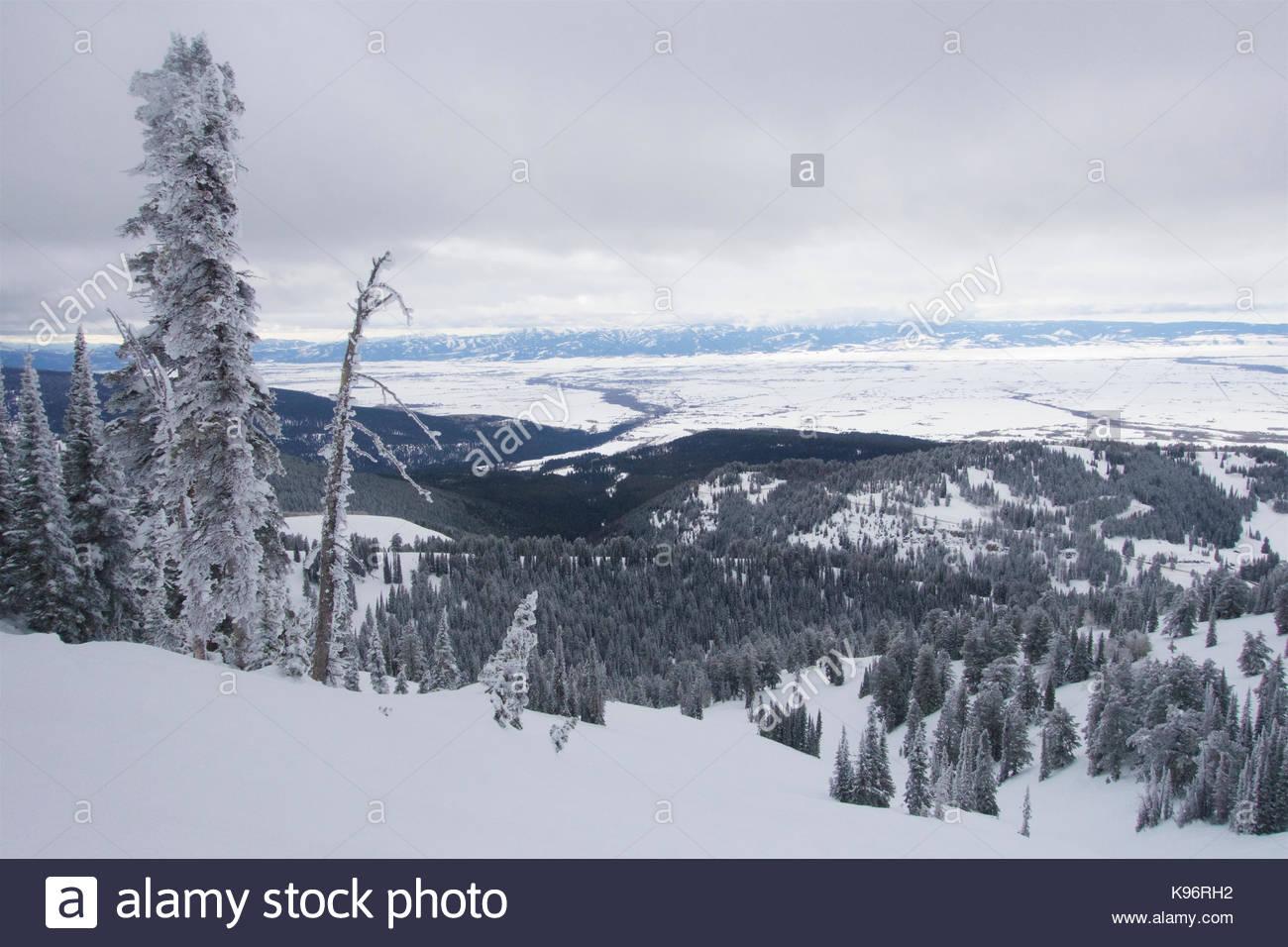 Szene Winter mit Schnee und Rauhreif bedeckt Bäume in die Berge. Stockbild