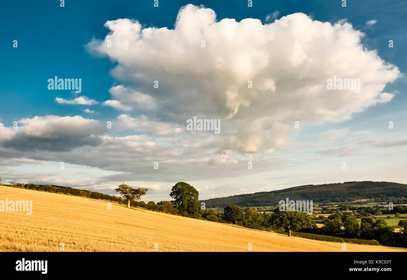 Stapleton, Herefordshire, UK. Abendlicher Blick über einen Drei-tage-Feld nach der Ernte, Spätsommer Stockbild