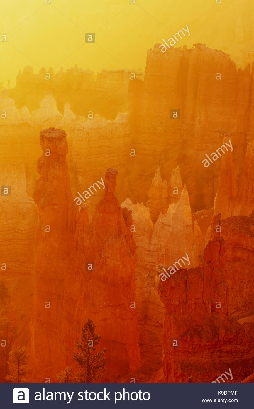 Dawn mit goldenen Licht, Bryce Canyon National Park, Utah Stockbild