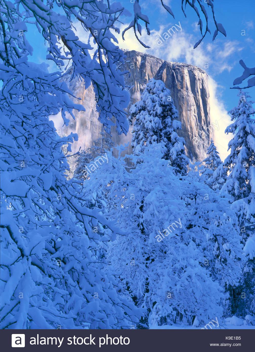 Nach dem Schneesturm El Capitan, Yosemite National Park, Kalifornien Stockbild