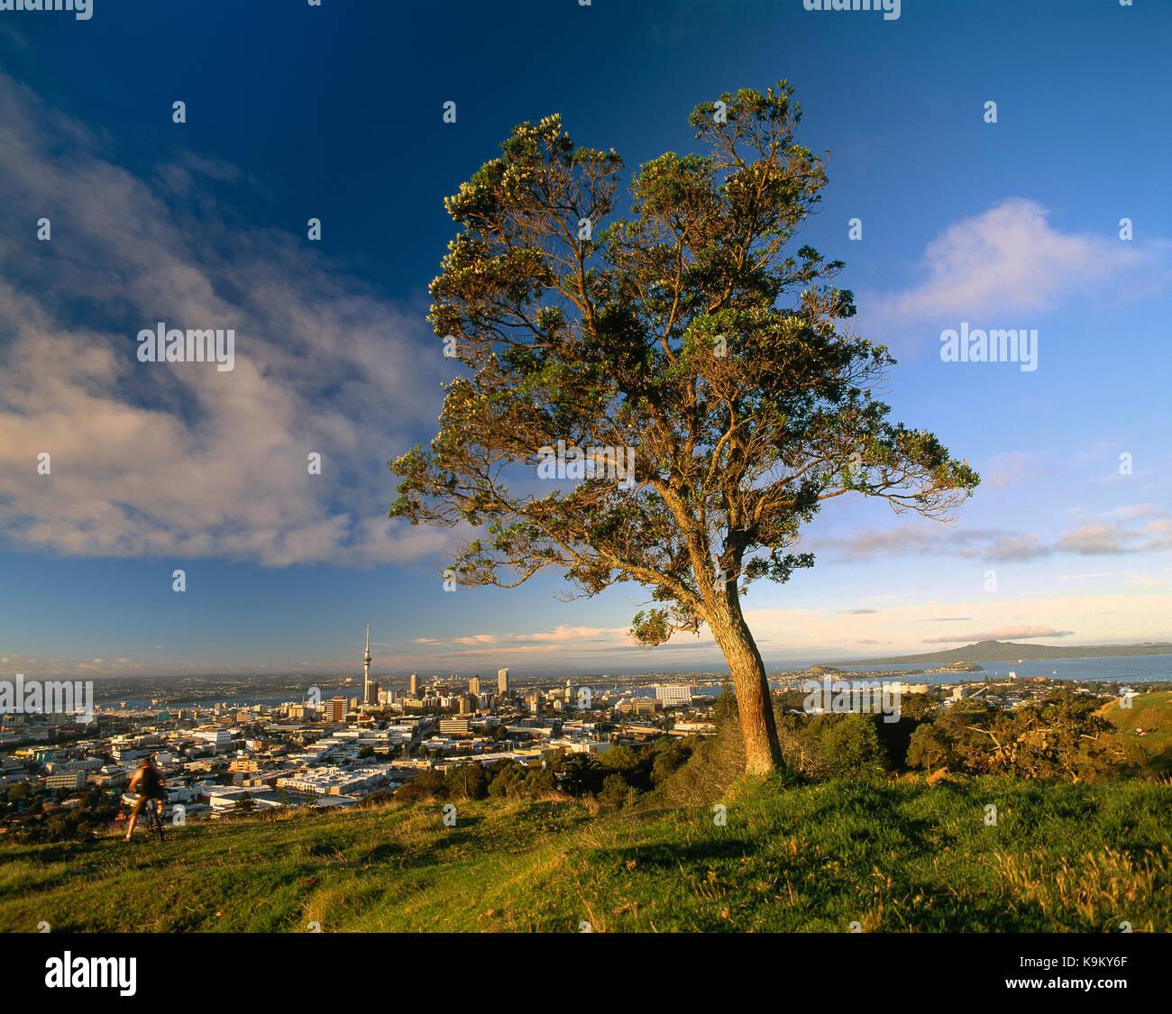 Neuseeland. Auckland. Hohe Aussichtspunkt der Stadt vom Mount Eden mit Baum. Stockfoto