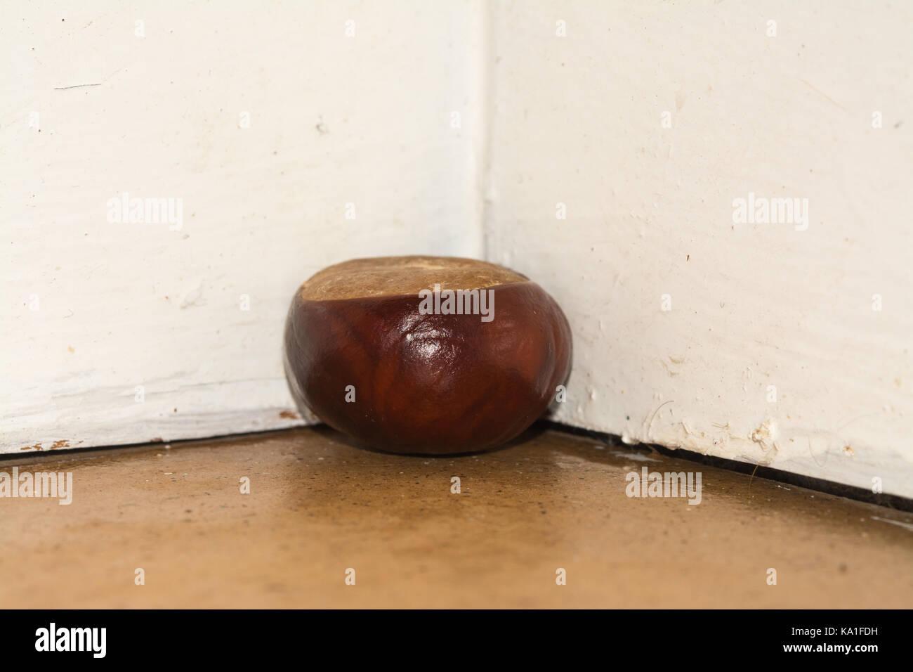 Conker oder Rosskastanie in der Ecke eines Zimmers spinnen Abzuschrecken platziert Stockbild