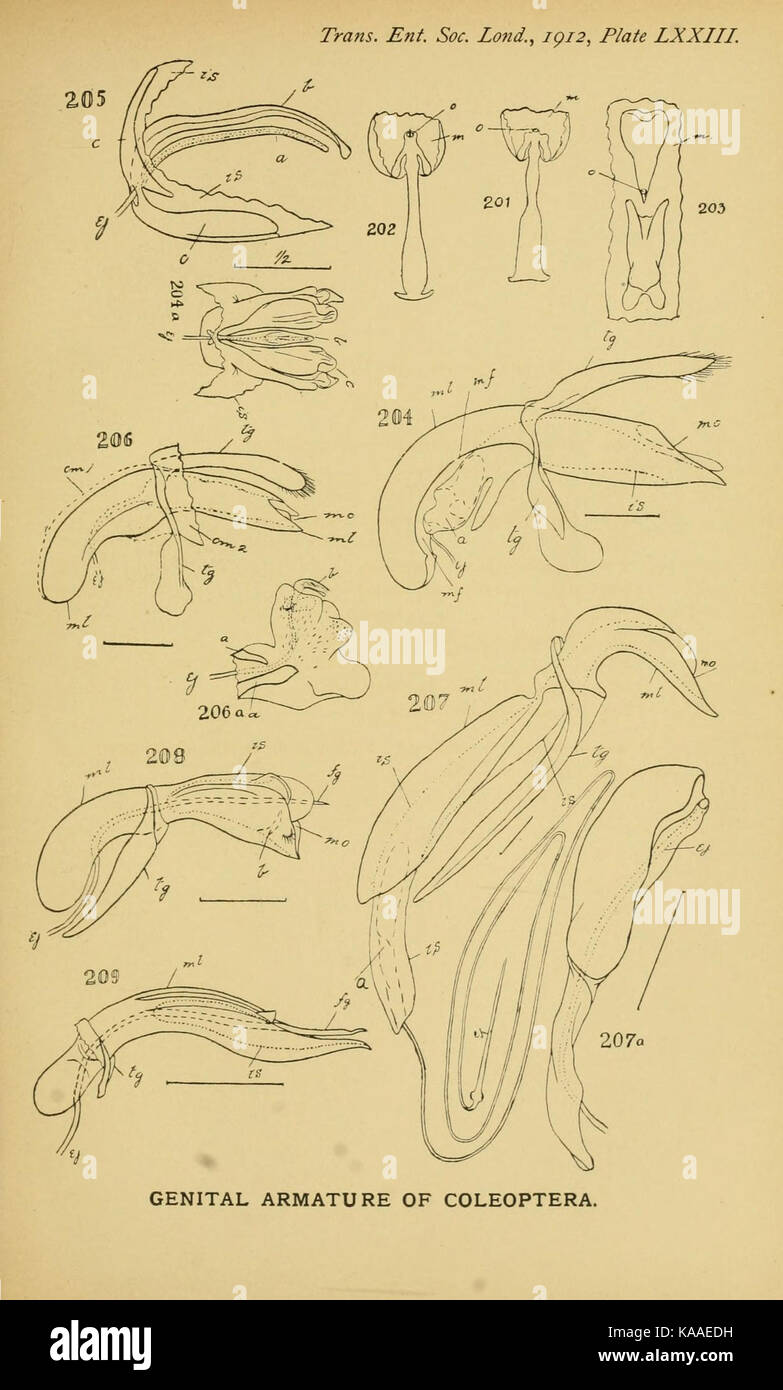 Großzügig Anatomie Und Physiologie Druckbare Study Guides Galerie ...