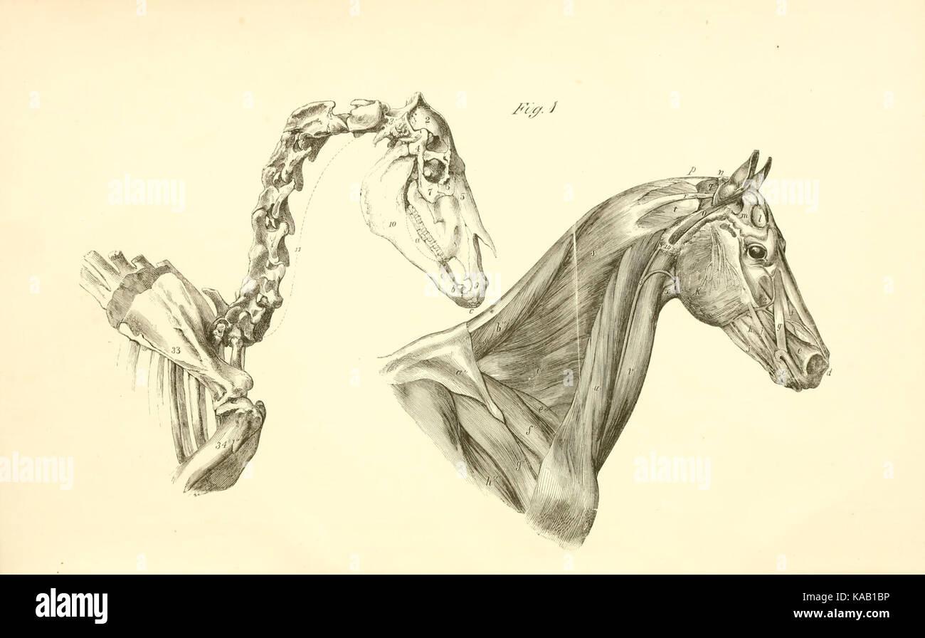 Ausgezeichnet Anatomie Des Vorurteils Galerie - Menschliche Anatomie ...