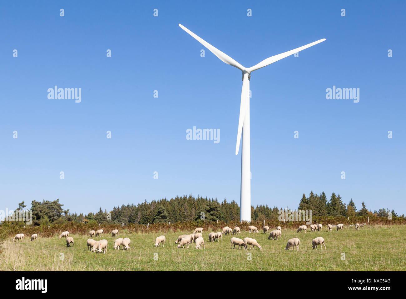 Grasende Schafherde neben einer Windkraftanlage in einem landwirtschaftlichen Feld in einem Konzept der nachhaltigen Stockbild