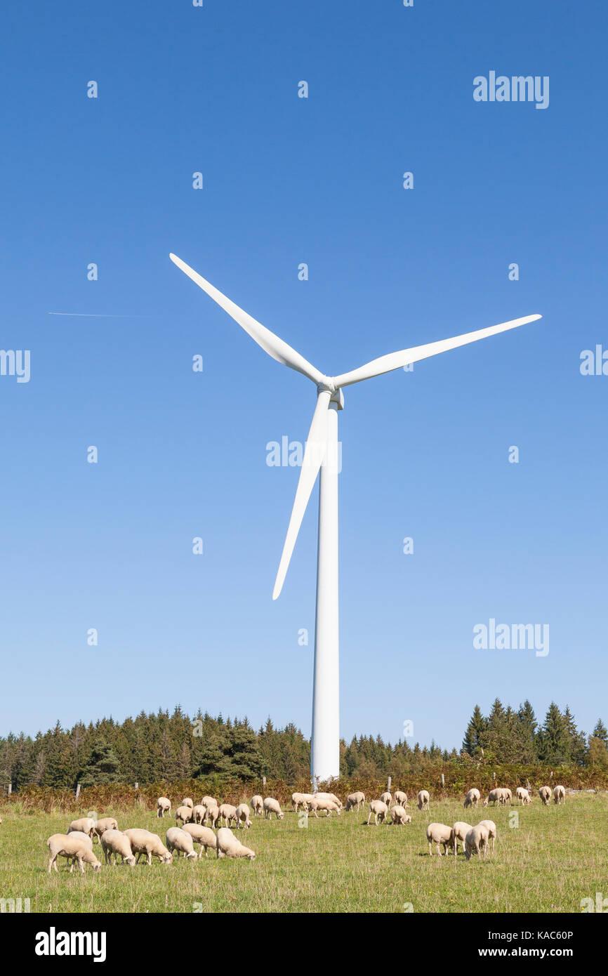 Herde Schafe auf einer Weide am Fuße einer Windkraftanlage in einem Konzept der nachhaltigen alternative Energie Stockbild