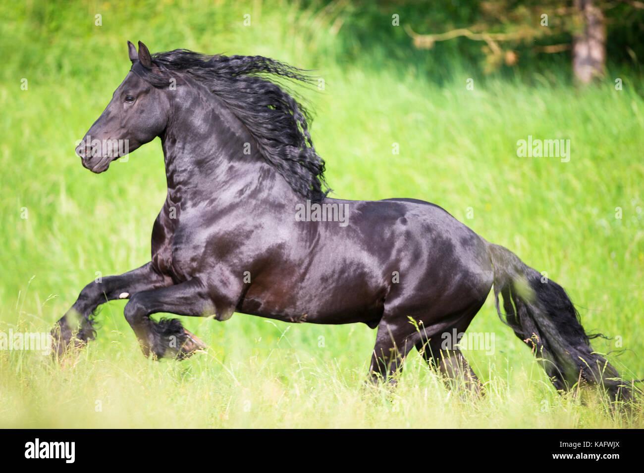 Schwarzes Tier pflügt zierliches Arschloch der reichhaltigen Französin Kimber Delice