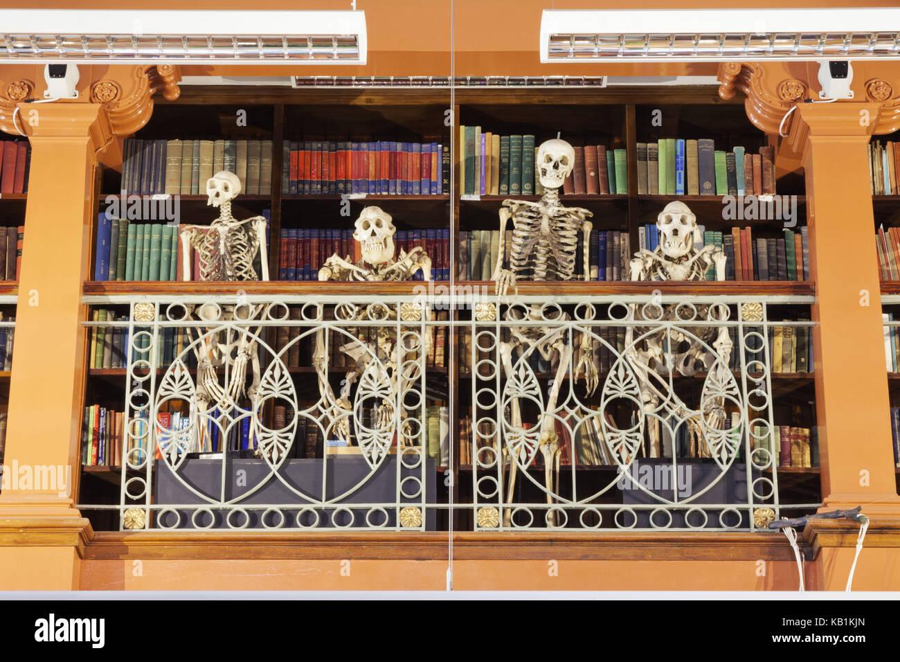 England, London, University College London, die Gewährung Zoologisches Museum, amüsante Ausstellung von Affen zu Stockfoto