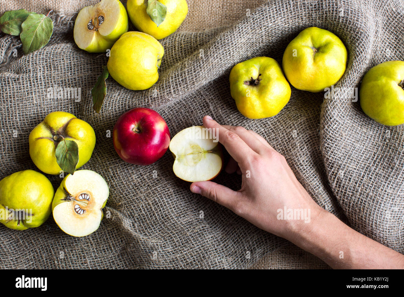 Herbst, Ernte, essen Konzept. Auf dem Grau texturierte fabrick sack Es gibt viele Früchte, grünen und Stockbild