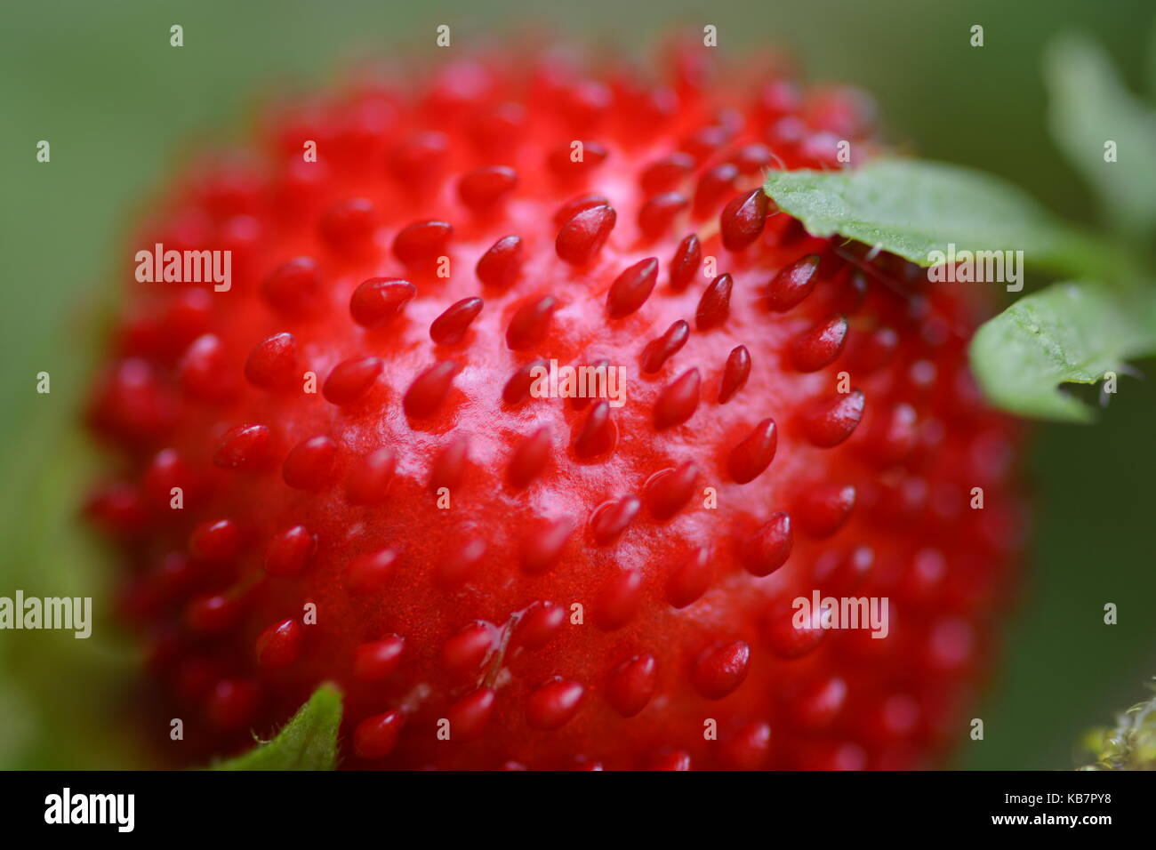Makro Obst Stockbild