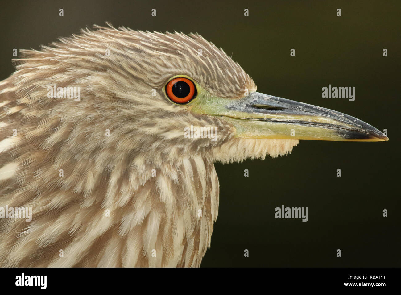 Detailed Eye Stockfotos & Detailed Eye Bilder - Alamy