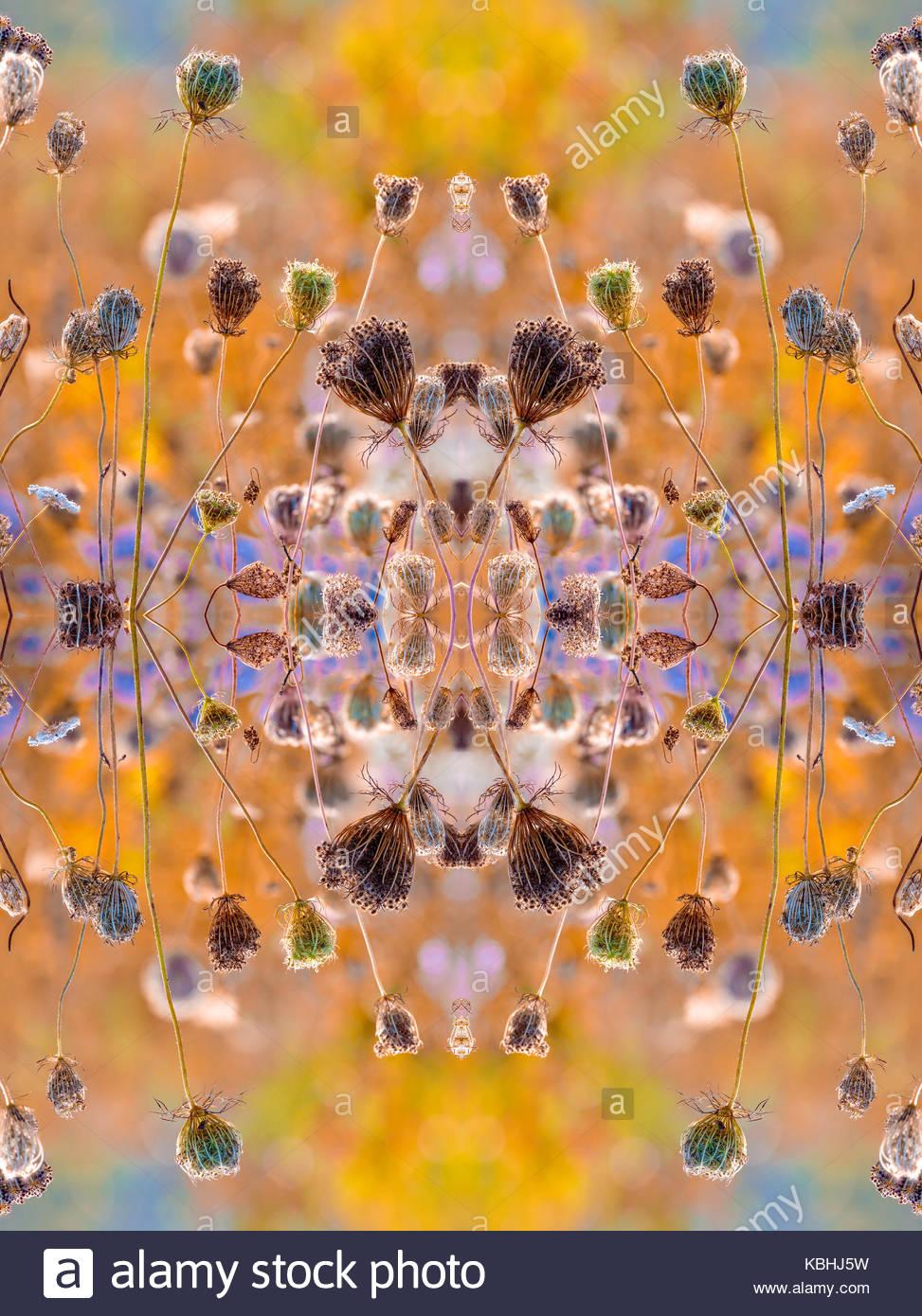 Kaleidoskop Muster von Obst Cluster von Queen Anne's Lace Wilde Möhre Daucus carota Spiegelsymmetrie symmetrische Stockbild