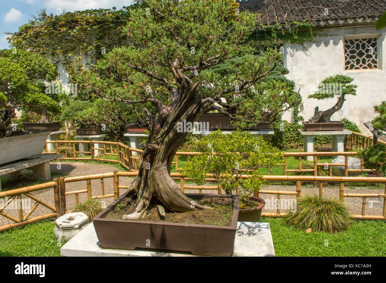 bonsai baum garten, bonsai baum in bonsai garten, den lingering garten, suzhou, china, Design ideen