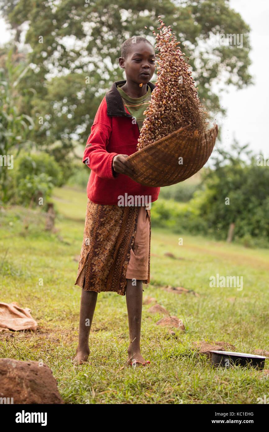 Mädchen worfeln Bohnen, Kenia Stockbild