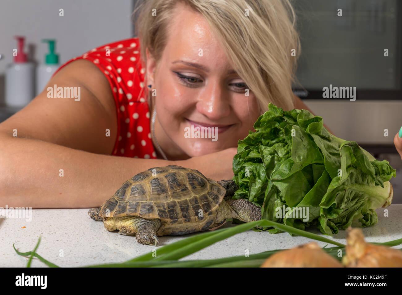 roman tortoise stockfotos roman tortoise bilder alamy. Black Bedroom Furniture Sets. Home Design Ideas