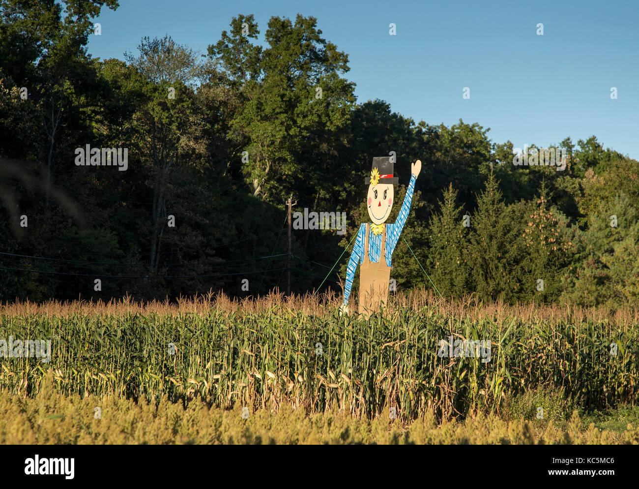 Eine Vogelscheuche in einem Maisfeld Stockbild