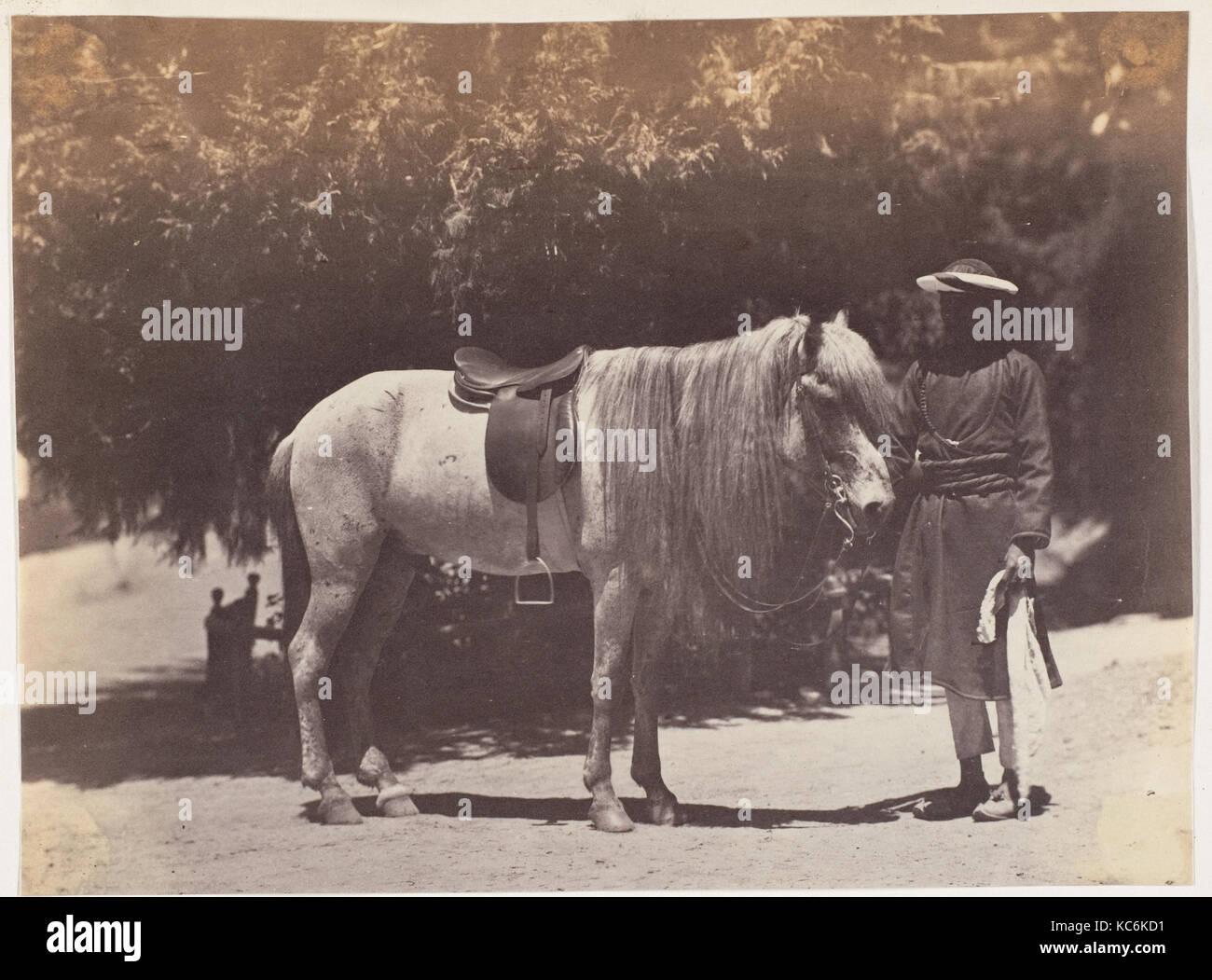 Lord canning Hill Pony, 1858-61, Eiweiß silber Drucken, Bild: 19,7 x 14,6 cm (7 3/4 x 5 3/4 in.), Fotografien, Stockbild