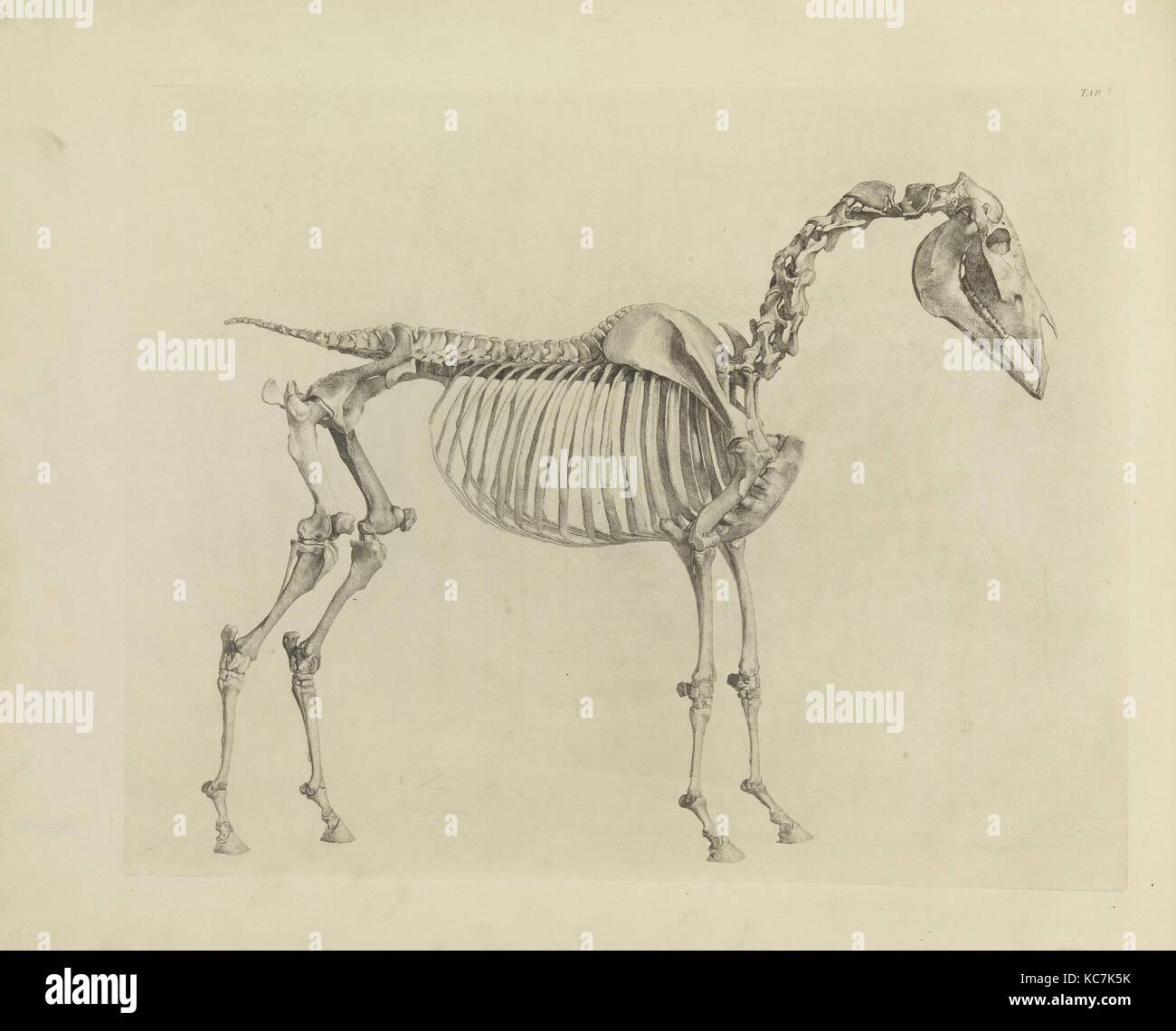 Cartilages Stockfotos & Cartilages Bilder - Alamy