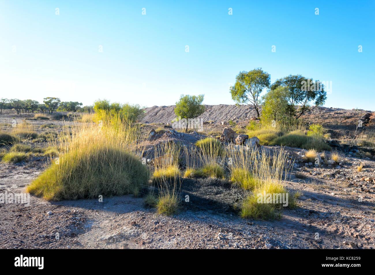Spinifex im Outback in der Nähe von Winton, Central West Queensland, Queensland, Australien Stockbild