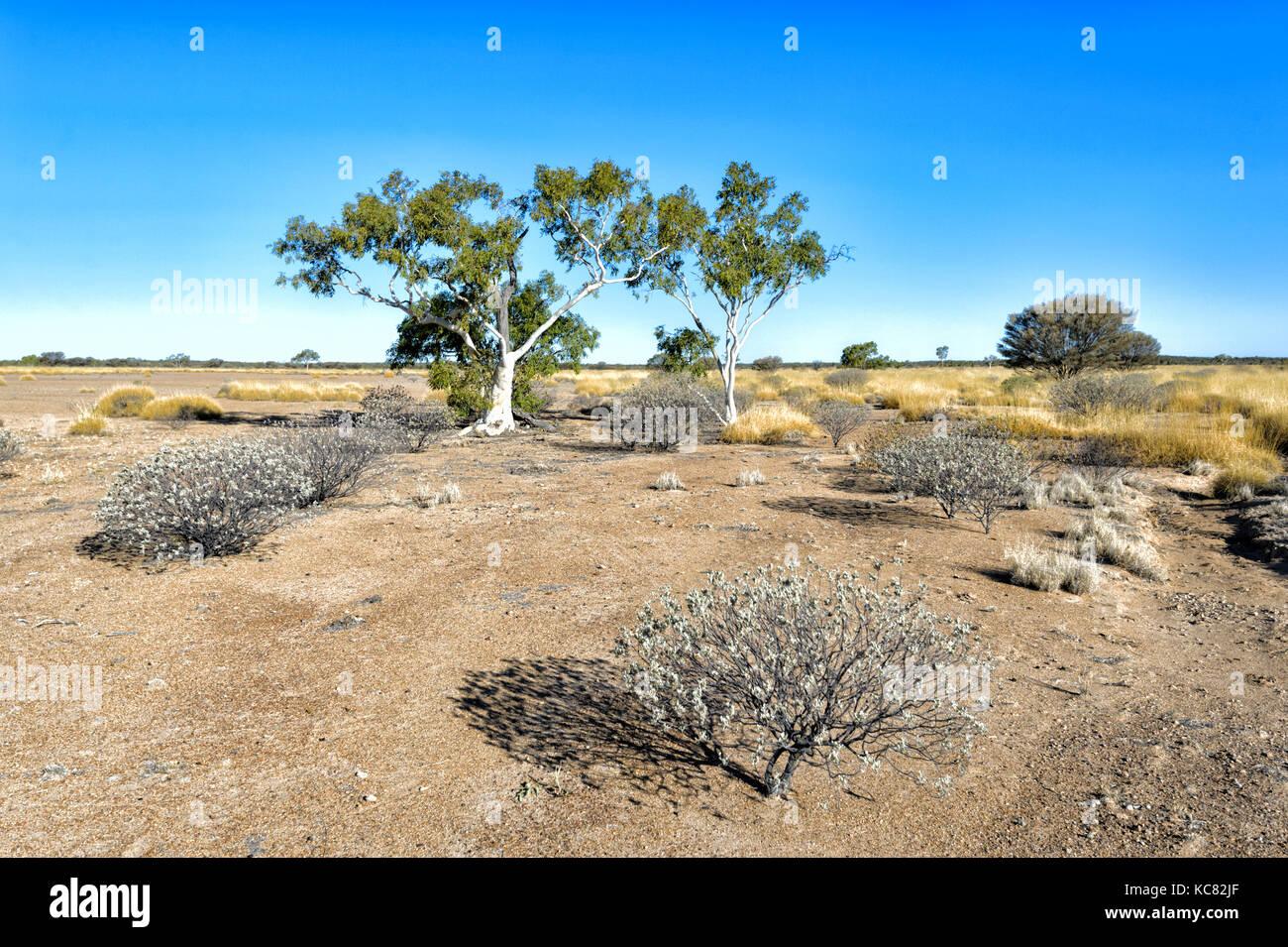 Dürre in den Outback in der Nähe von Winton, Central West Queensland, Queensland, Australien Stockbild