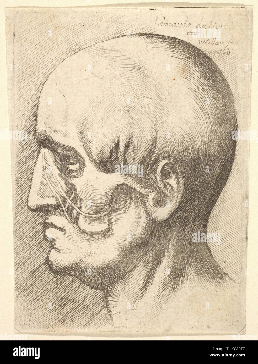 Atemberaubend Anatomie Rückseite Des Kopfes Bilder - Anatomie Ideen ...