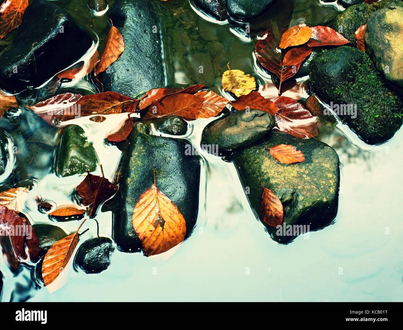 Herbstfarben. Detail der Faulen alten Blätter auf Basalt Schotter in gespiegelten Wasser der Bergbach. leuchtend Stockbild