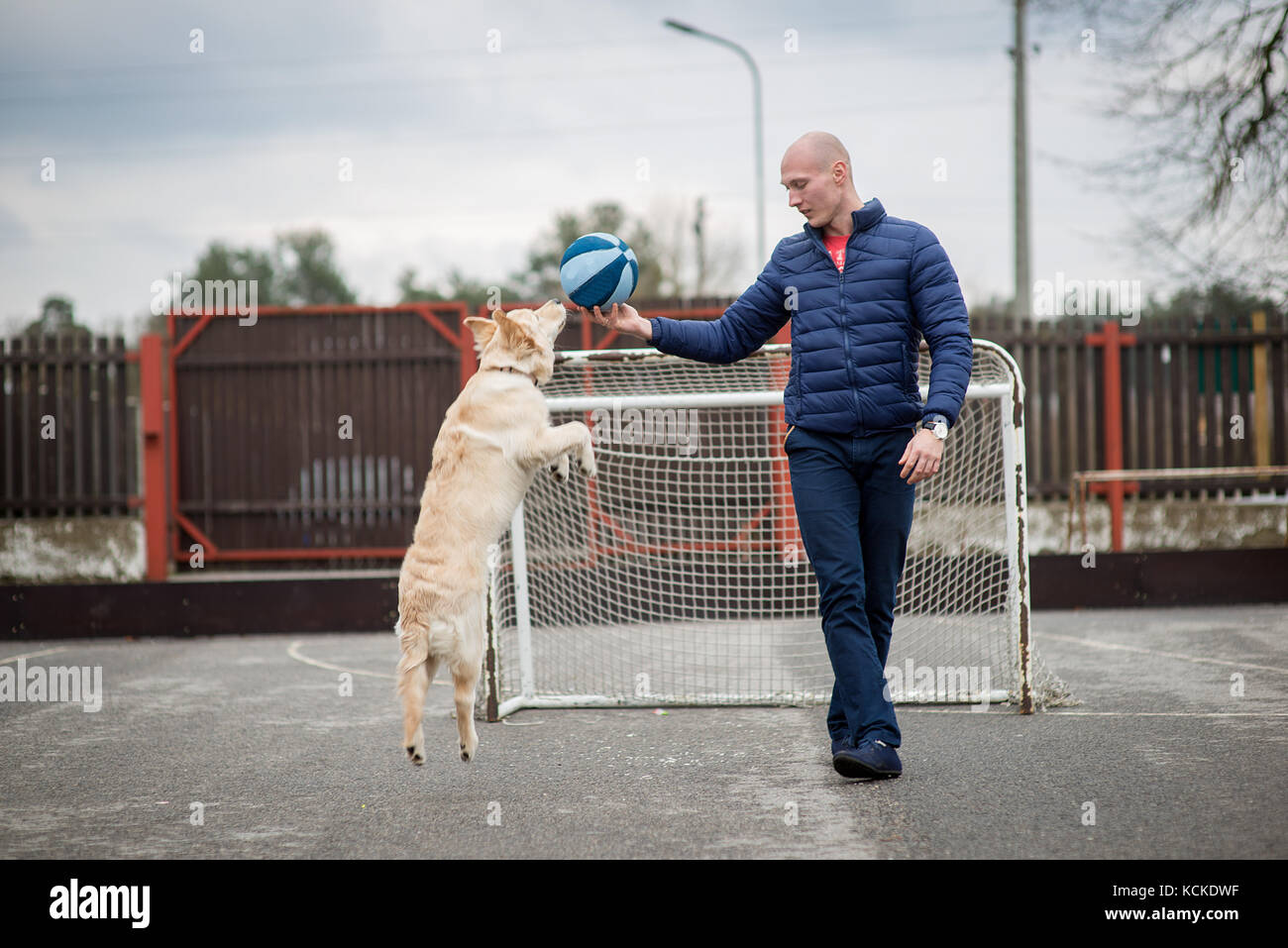 Golden Retriever Hund und Mensch Stockbild