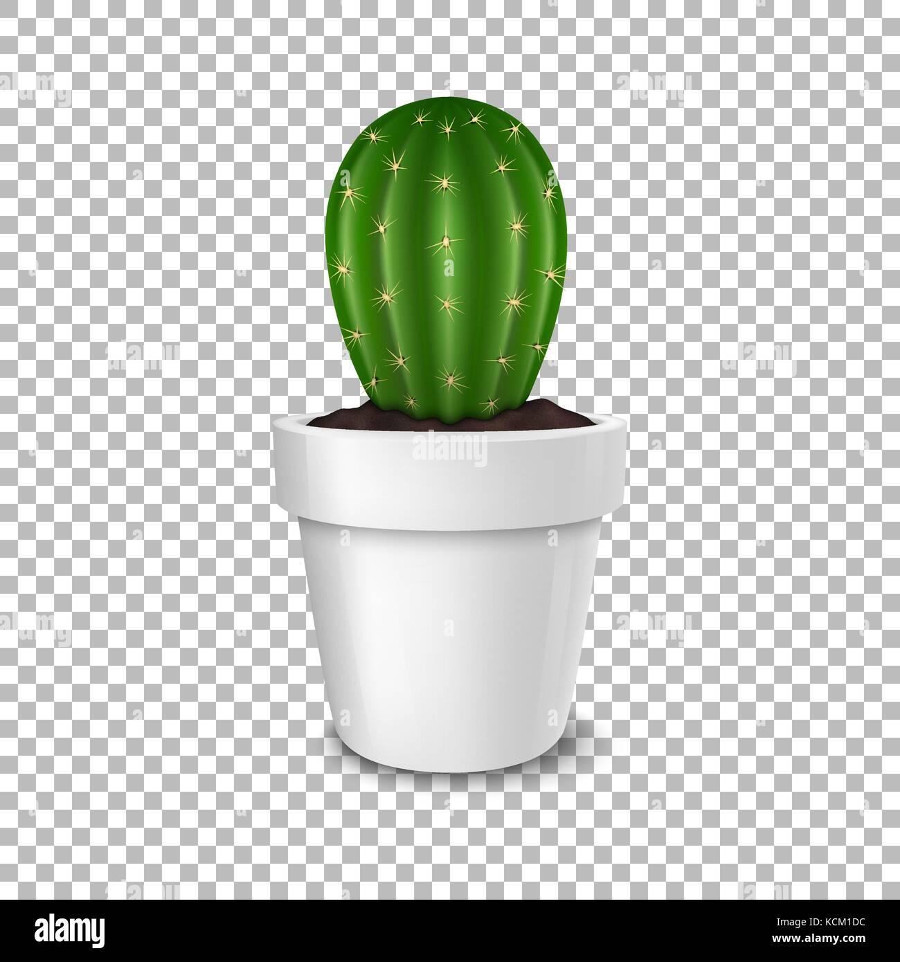 Realistische Dekorative Kaktus Anlage In White Flower Pot Symbol Closeup Auf Transparenten Hintergrund Isoliert Design Template Mockup Vektor EPS 10