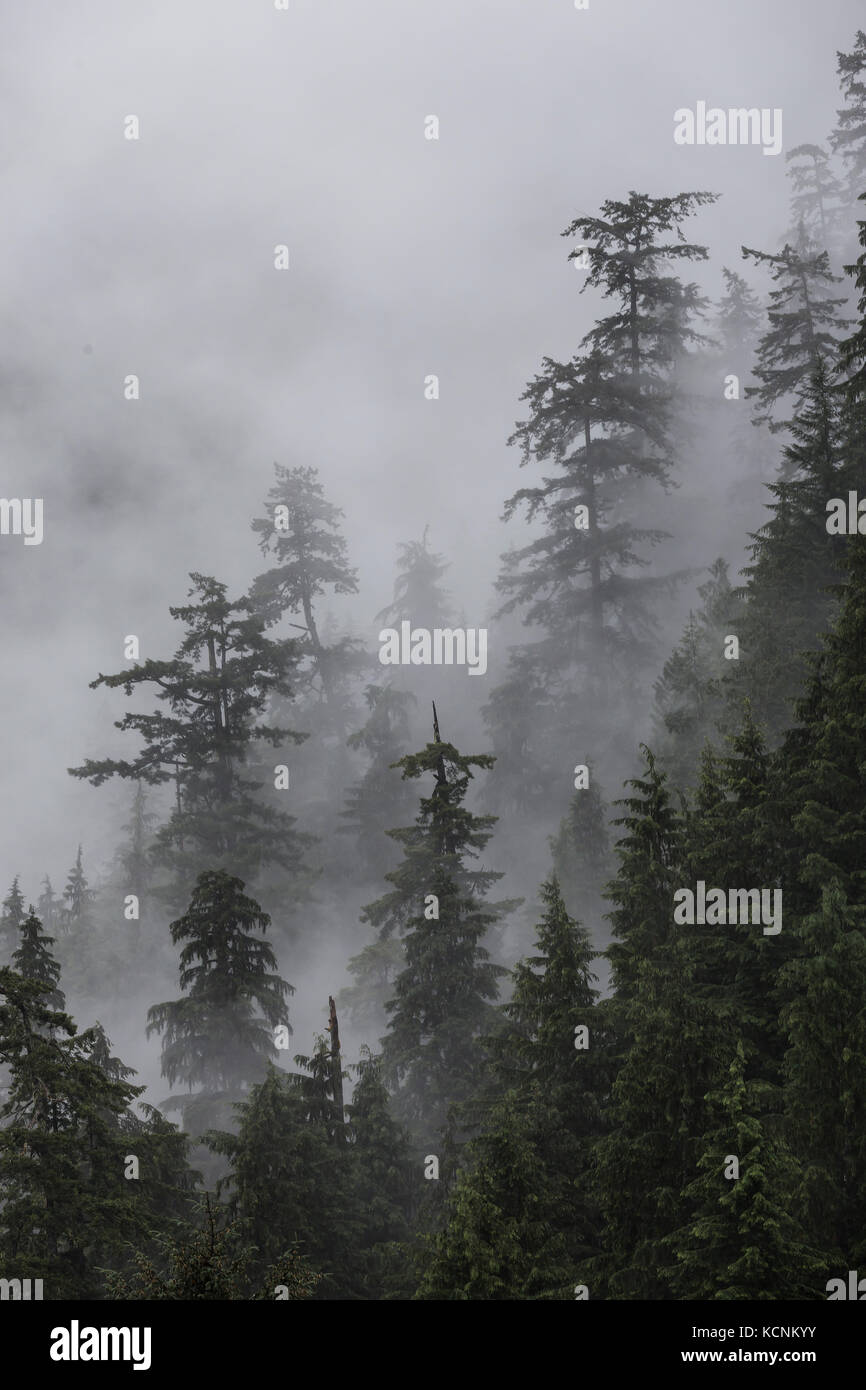 Nebel umgeben Bäume an einem Hang eine ätherische Präsenz, der Inbegriff des Coastal Scenic, Vancouver Stockbild
