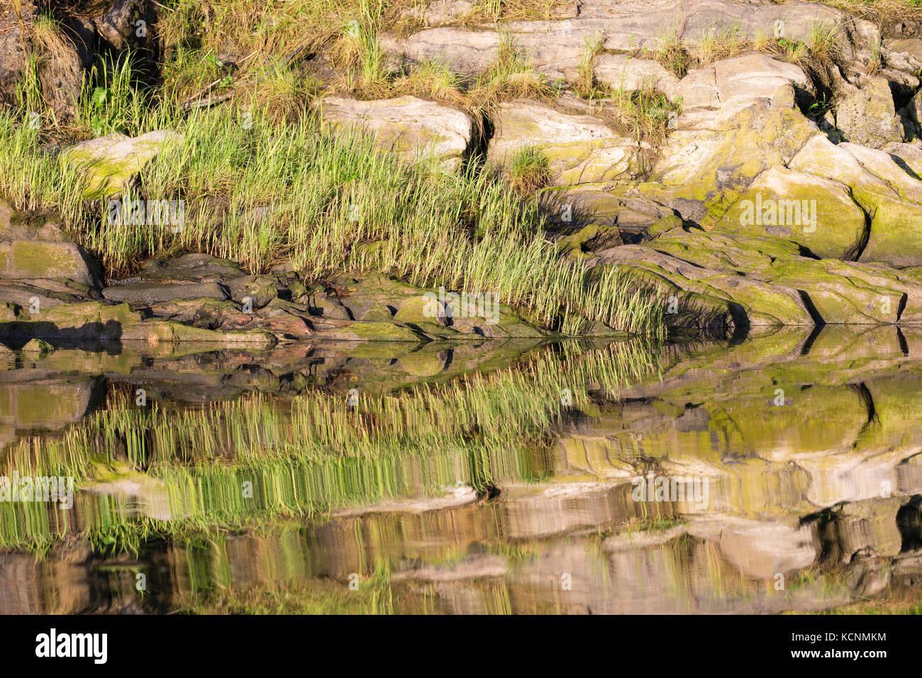Shoreline Reflexionen, kwinimass Estuary, British Columbia, Kanada Stockbild