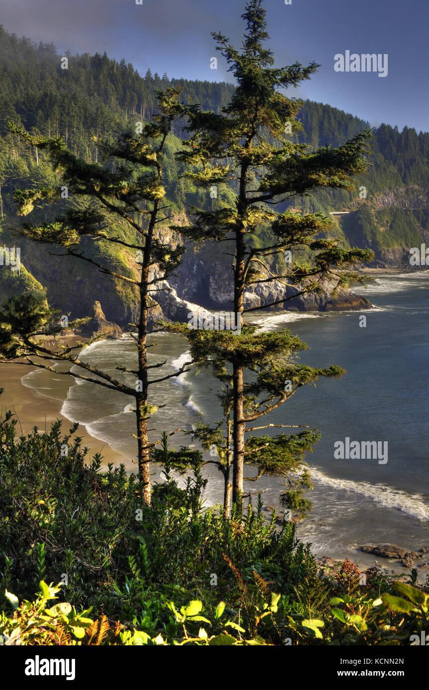 Oregon Küste in der Nähe von Heceta Head Lighthouse, nördlich von Florenz, Oregon, USA Stockbild