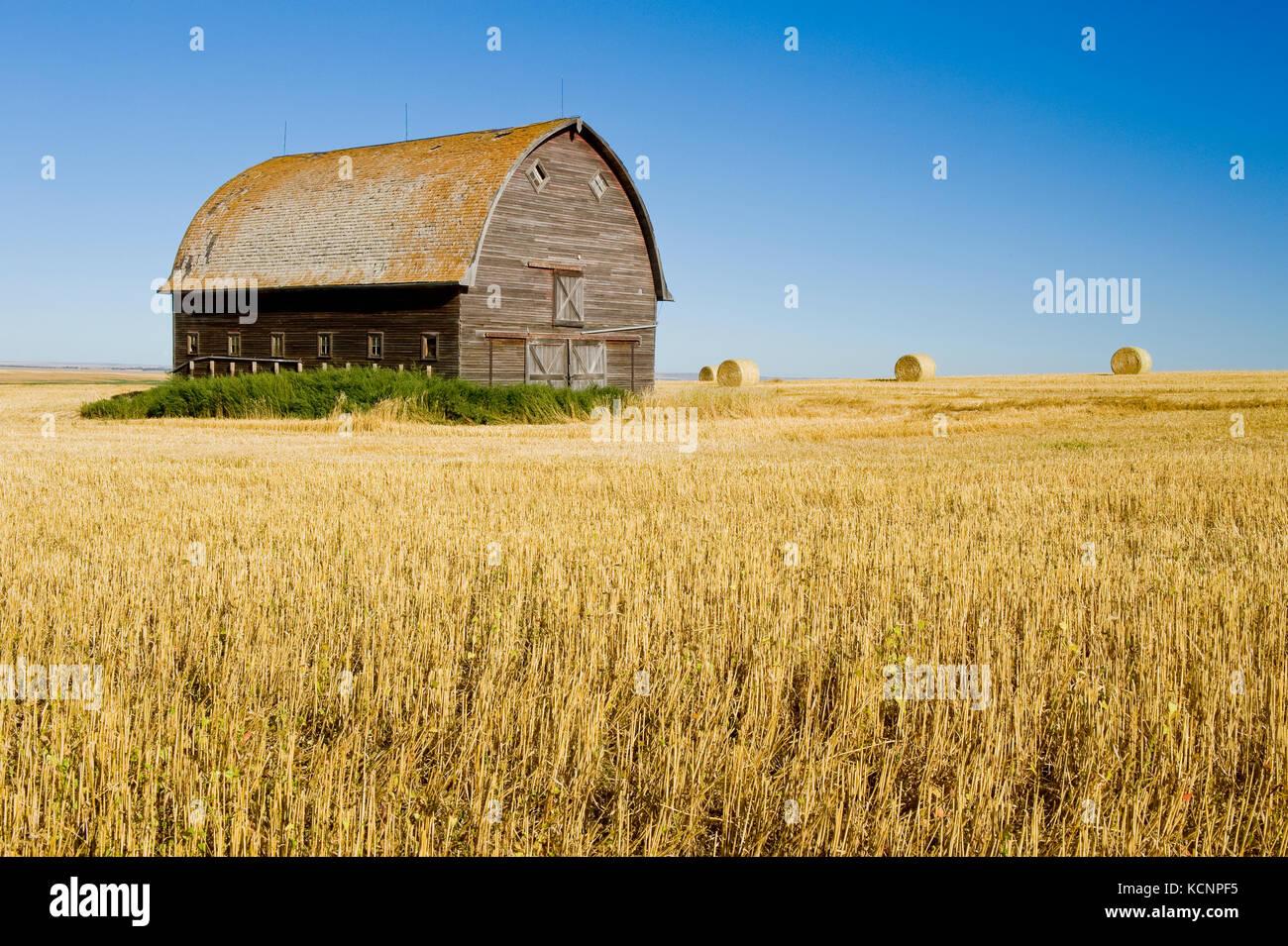 Alte Scheune in einem Hartweizen stoppeln Feld in der Nähe von ponteix, Saskatchewan, Kanada Stockbild