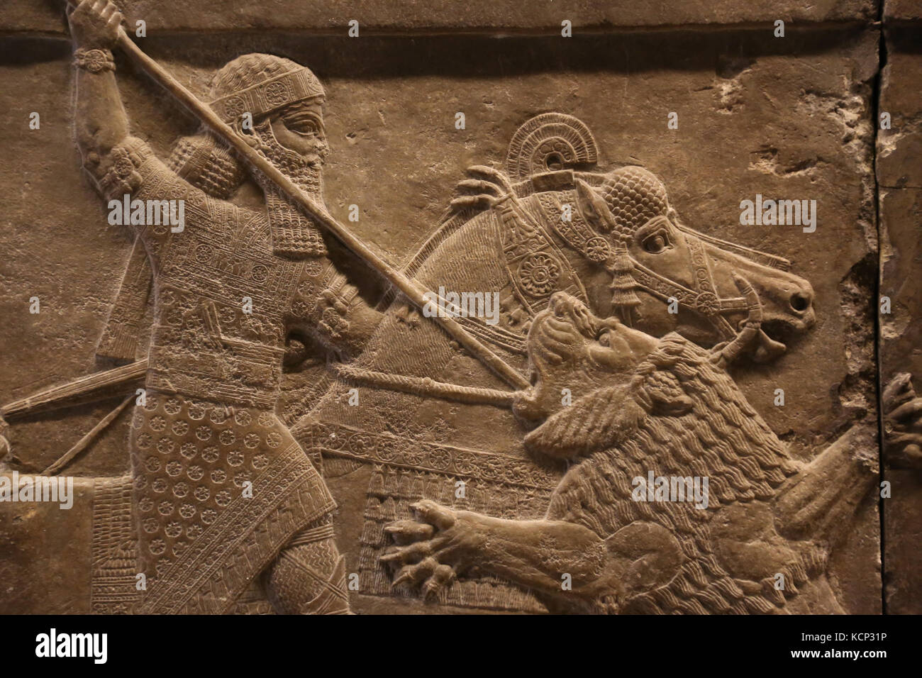 Assurbanipal Jagd Löwe. Erleichterung. neo-Assyrer. Palace, Ninive, Irak. 645-635 Bc. british museum london. Stockbild