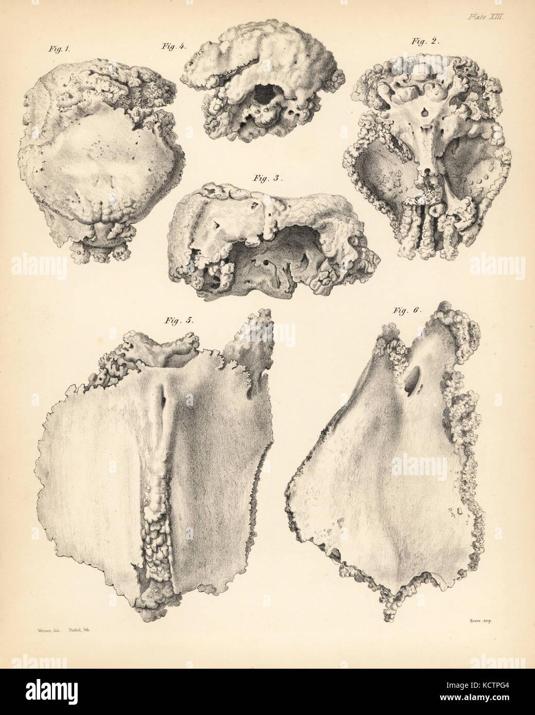 Ausgezeichnet Brustbeins Bild Ideen - Menschliche Anatomie Bilder ...